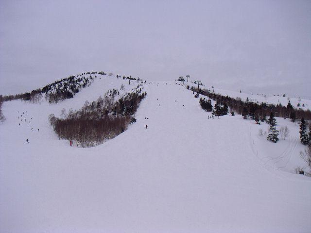 20060318g.jpg