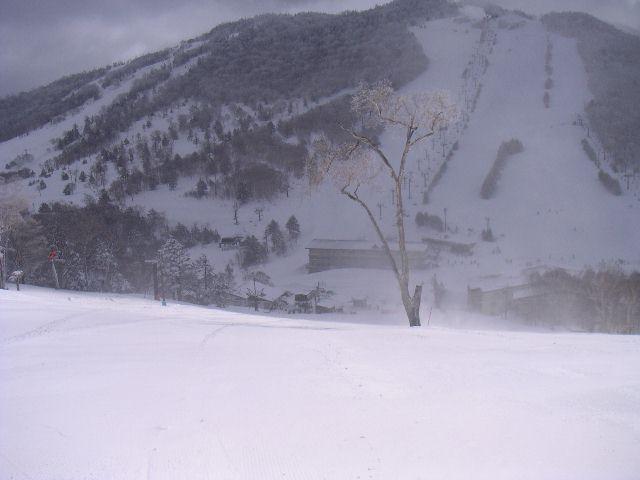 20060320b4.jpg