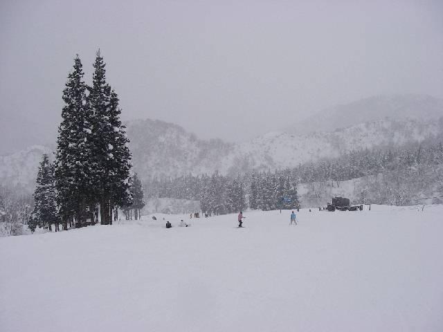 2008012005.jpg