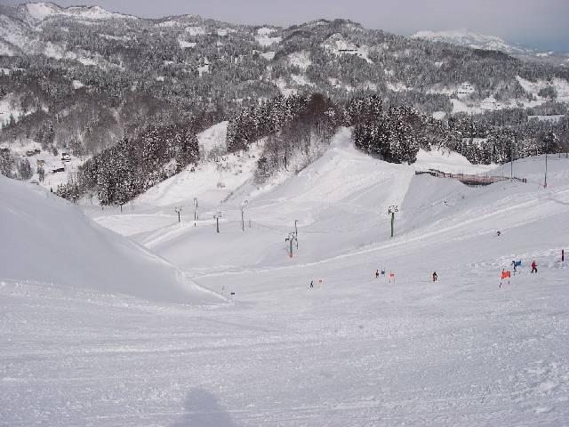 20080202a15.jpg