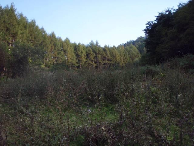 20081004b17.jpg